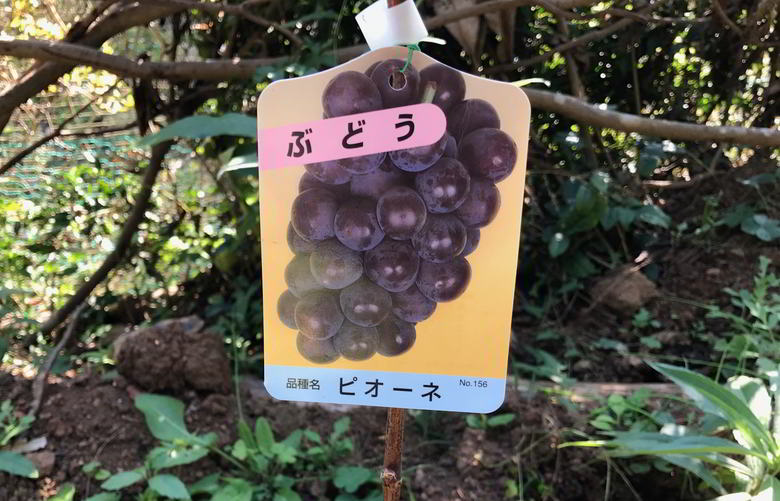 【山羊楽園】果樹の植え付け