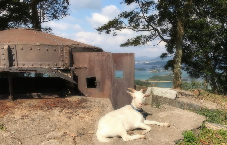 【山羊楽園】山羊達の小屋ば作るばい