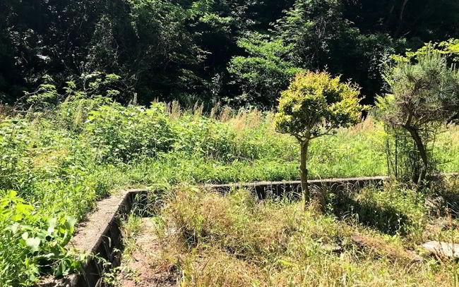 大和町草刈りビフォー-001