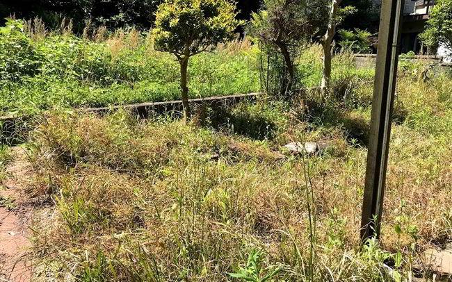 大和町草刈りビフォー-002