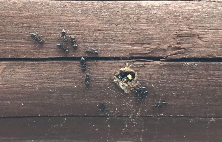 【店舗製作】セッセセッセと蟻?は頑張るばい...★店舗横壁ば進めるばい
