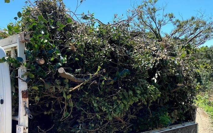 伐採ゴミ枝葉