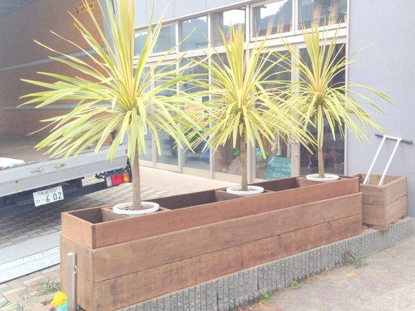 完成した花壇に3つ並んだ大きな植物