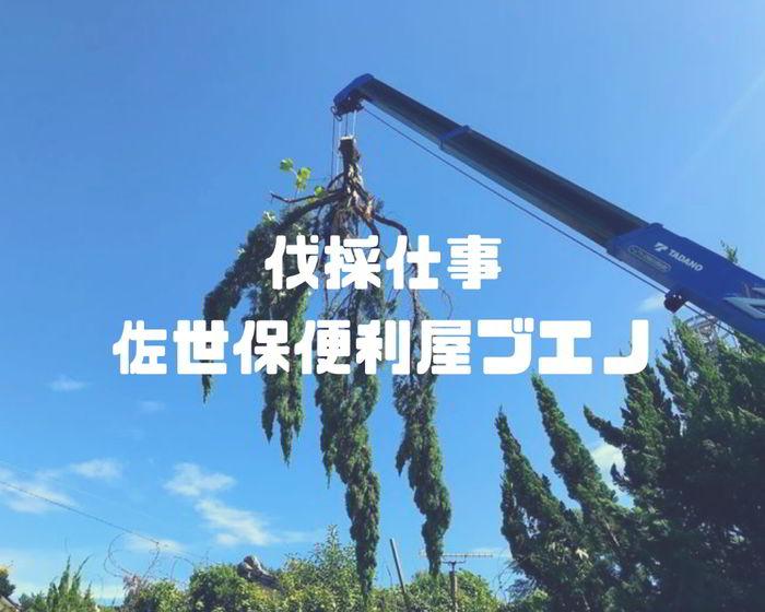 【伐採仕事】 佐世保市大潟町で崖の木の伐採2日目ばい