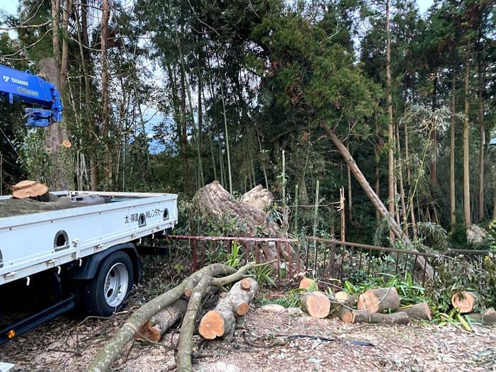 樫大木伐採