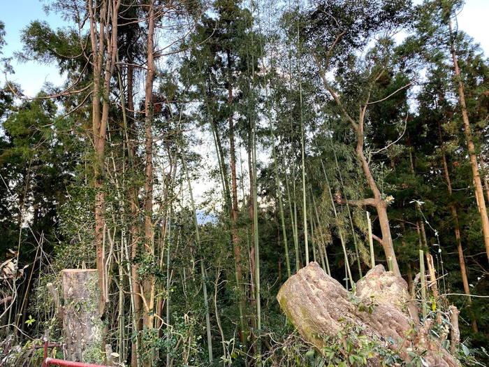 長崎県諫早伐採終了
