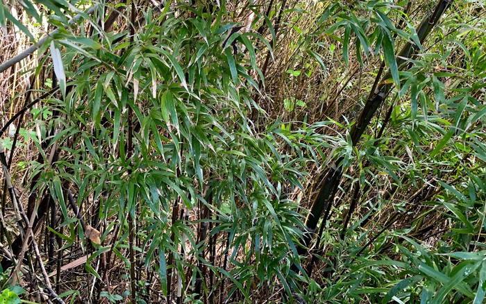 【草刈り・伐採仕事】小竹の伐採は大変