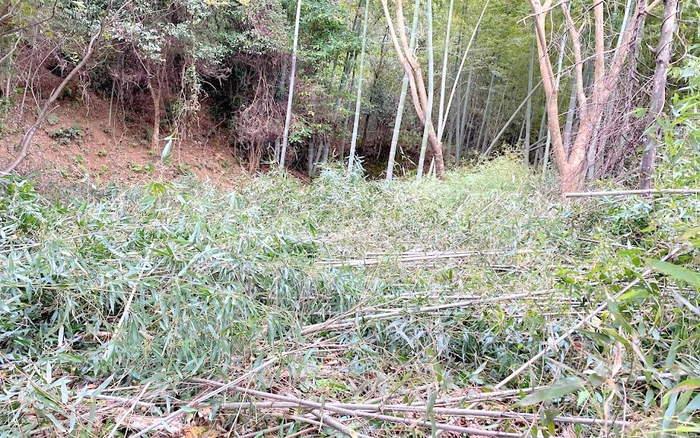 【伐採仕事】竹林の伐採(佐賀)