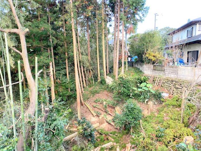 杉の伐採終了