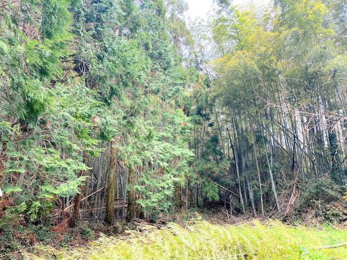竹伐採終了