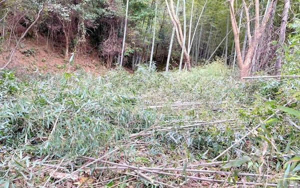 竹林伐採後