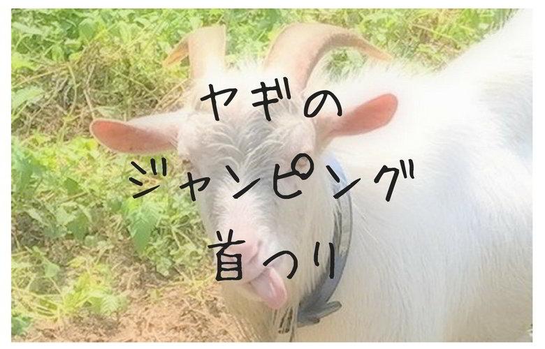 【今日のヤギ】bye-bye雄ヤギ ミズキ★でもさ...アッカンベーはないやろヽ(゜Д゜)ノ しかもジャンピング首つりまで...