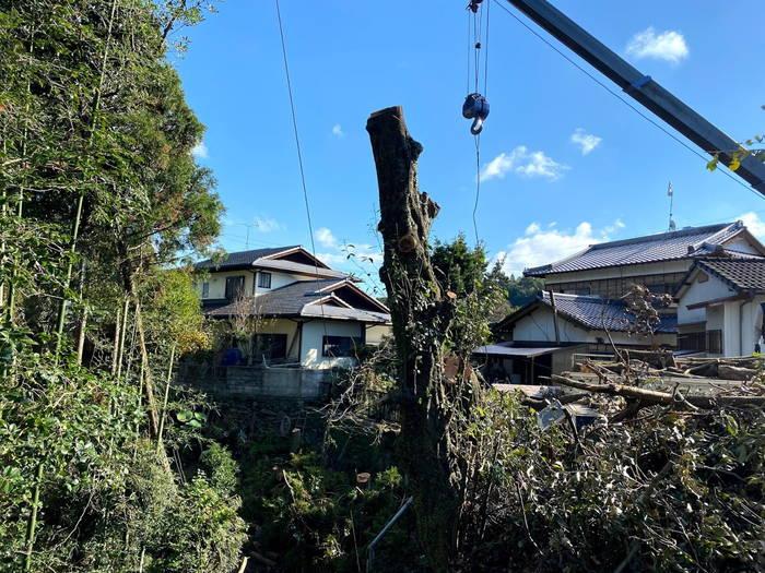 吊切り伐採
