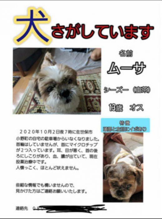 【お願い!】佐世保市でシーズ犬を探しています。ブエノ100,000円無料券