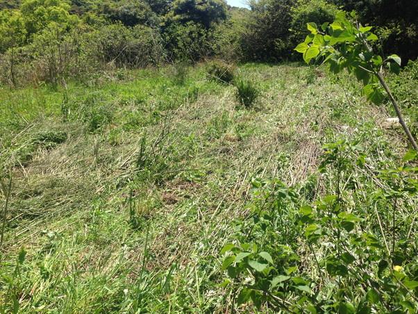 木や草が生い茂った土地がキレイになりました
