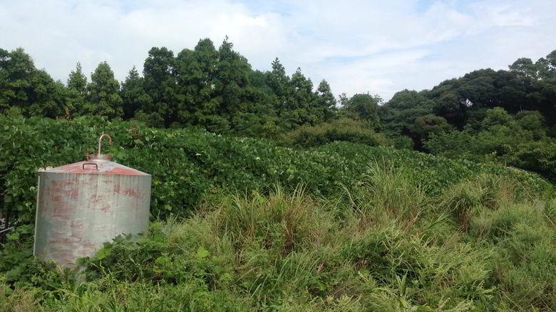 【解体仕事】佐世保市鹿町町で農業用ビニールハウスの解体ばーい