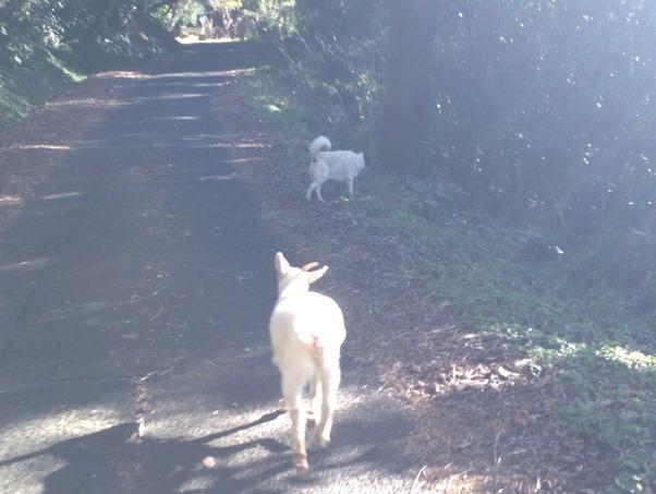 犬とヤギが一緒に散歩