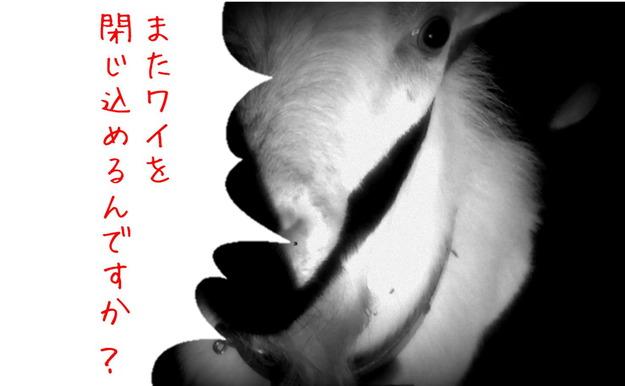 【今日のヤギ】山羊を檻に...山羊の悲鳴... 注意→悲鳴が流れます(笑´∀`)